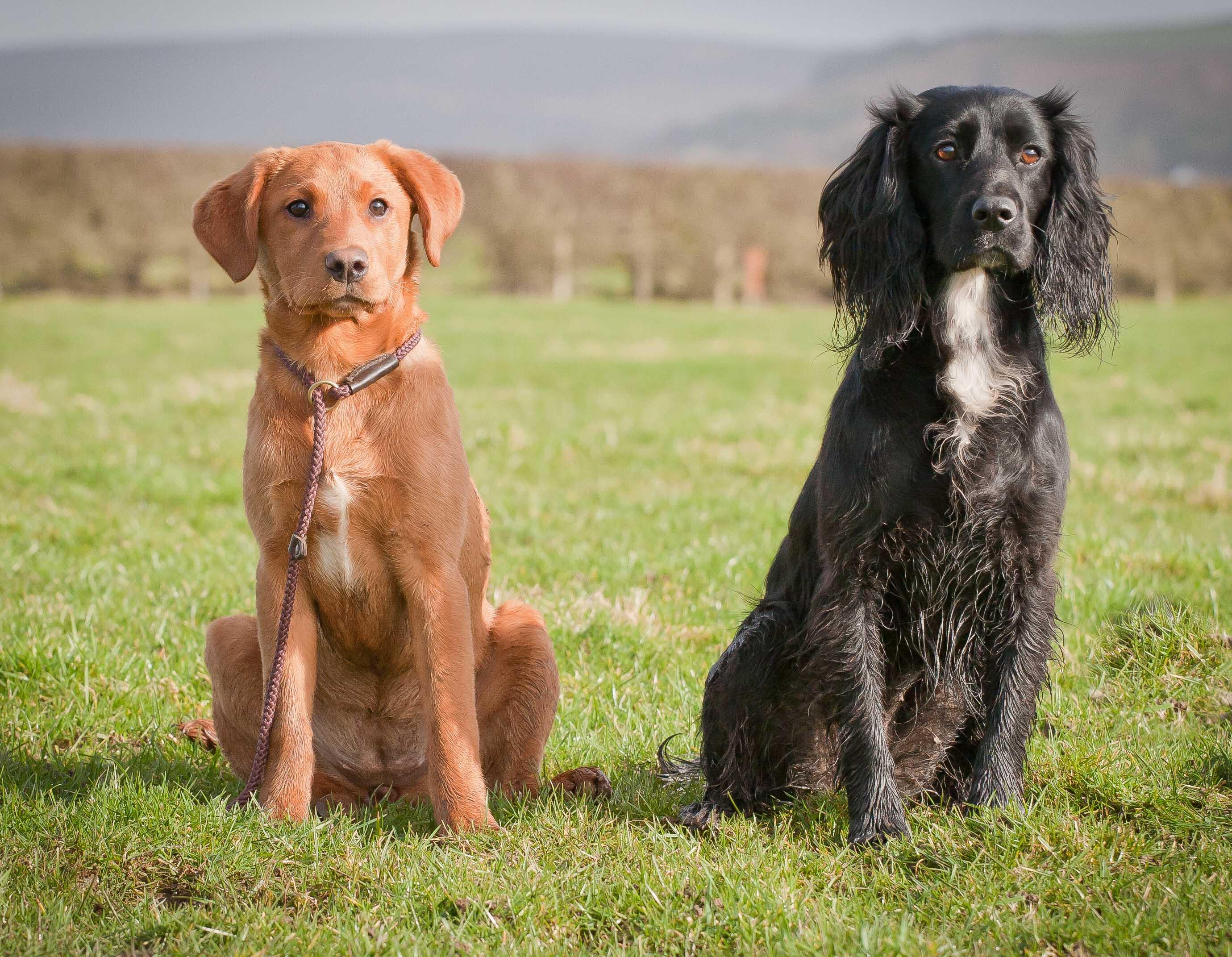 Bracken Dogs Name Gundog Cocker Spaniel