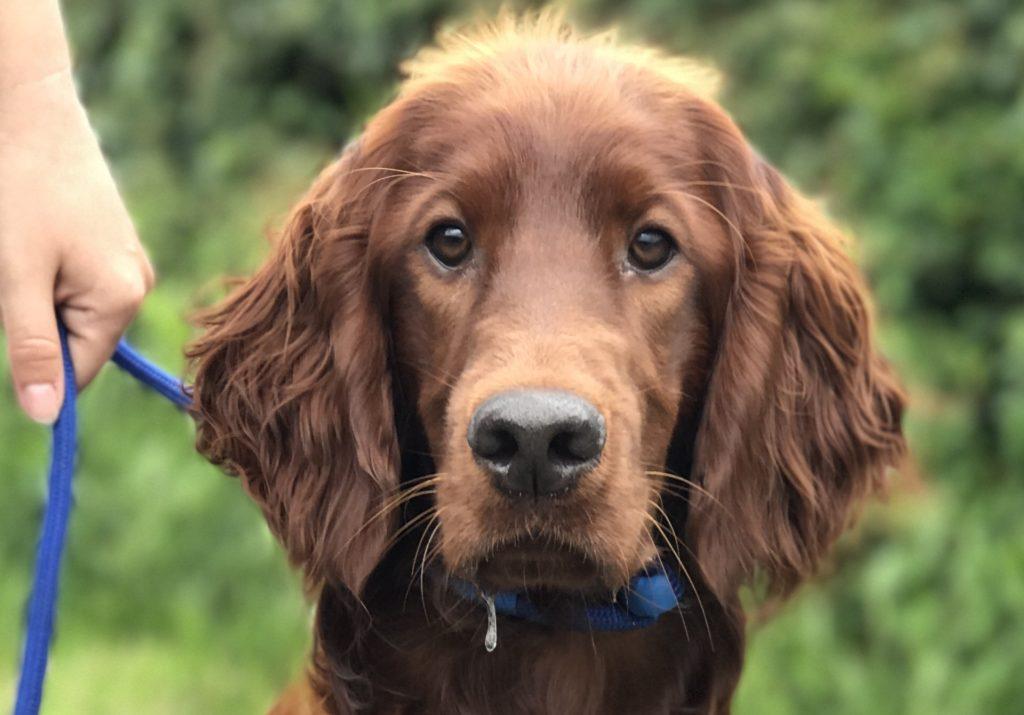 Dog Training Preston
