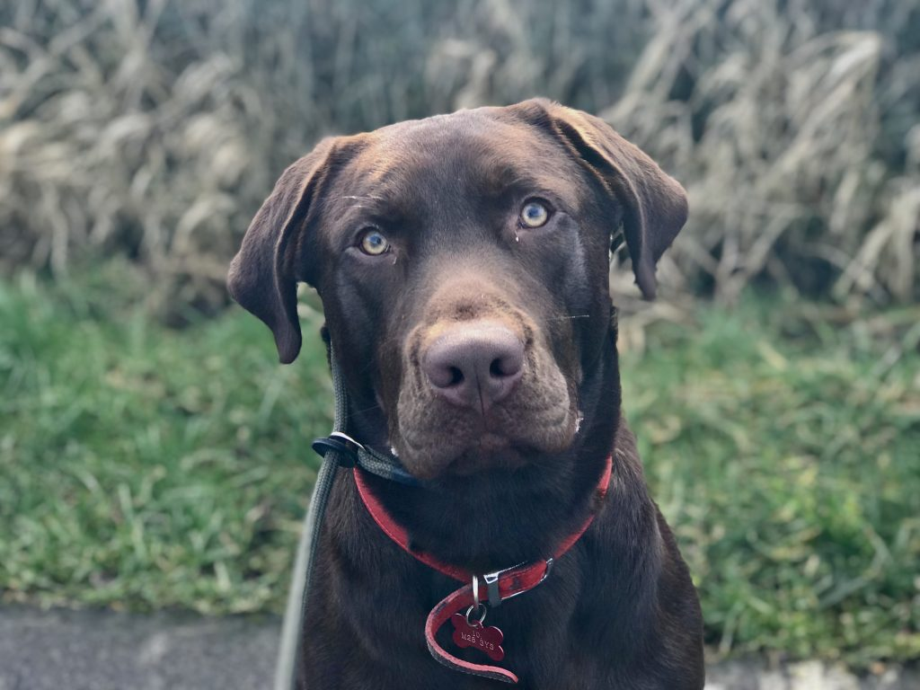 dog training aggressive dog